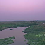 uasatish, India, blog, landscape, Vasai, nature; wetlands,