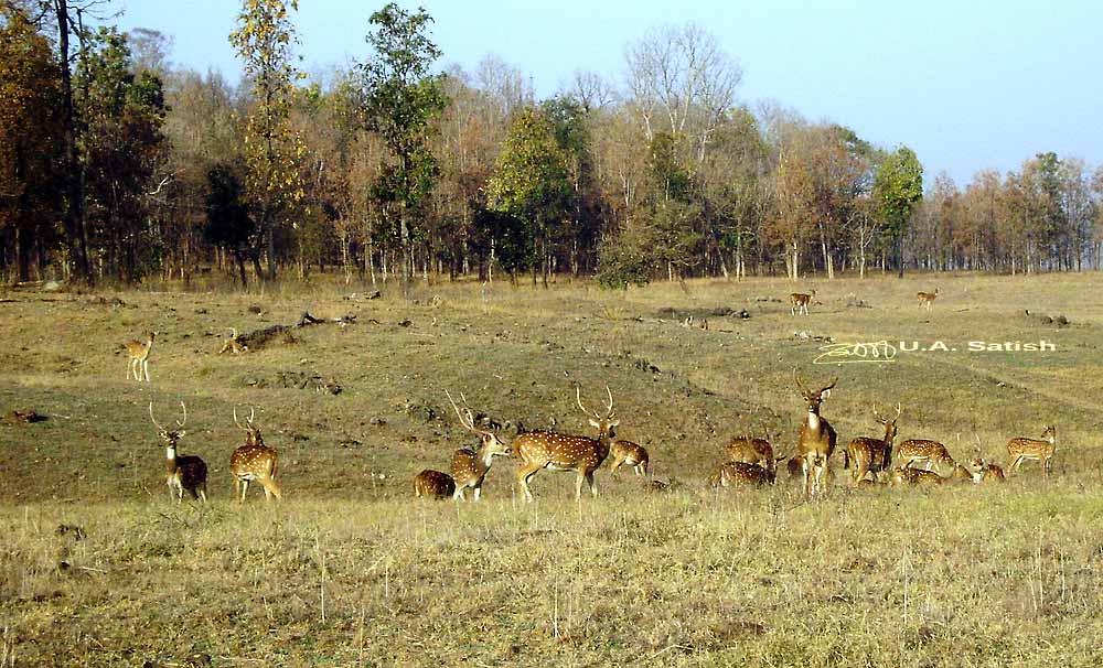 Pench Tiger Reserve, Madhya Pradesh, India, uasatish, wildlife, Seoni,