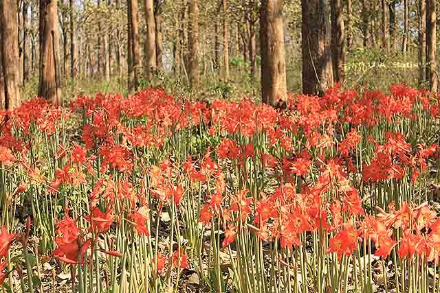 uasatish, India, flowers, Wayanad,