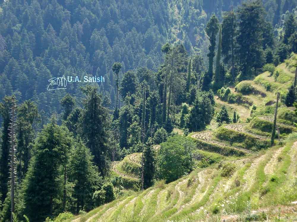 Dalhousie, Himachal Pradesh, India, hills woods, uasatish,