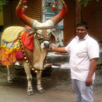 uasatish, India, Vasai, bull, blog,