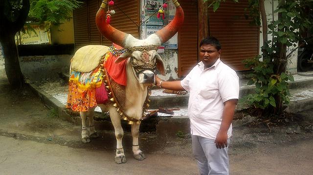 uasatish, India, Vasai, bull, blog,