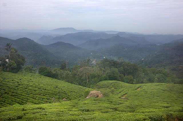 Munnar; Kerala; India; hills; mist; outdoor; travel; uasatish;