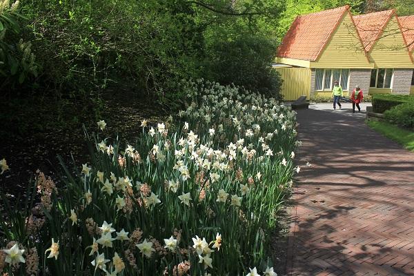 Keukenhof Tulip Gardens; Lisse; Netherlands; Holland; Netherlands; tulips; flowers; outdoor; travel; nature; uasatish;