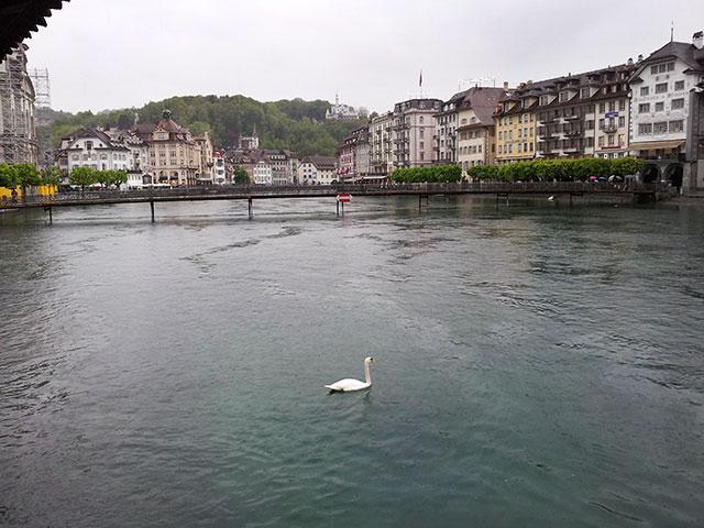 Lucerne; Switzerland; River Reuss; swan; outdoor; buildings; uasatish;
