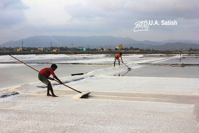 salt pans; Mumbai; India; workers; uasatish;