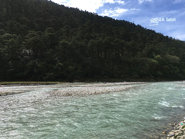 Yumthang Valley; stream; trees; hill; uasatish;