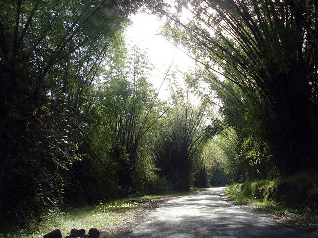 Road; Thirunelli; bamboo trees; Kerala; India; uasatish;