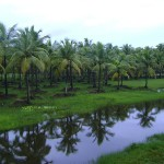 Kerala, rains, coconut trees, monsoons, nature, uasatish,