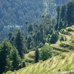 Dalhousie, Himachal Pradesh, India, hills woods, uasatish,