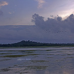 uasatish, India, nature, Vasai, flaminngos, landscape, photography,