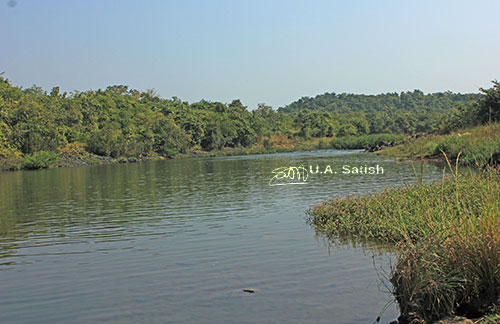 uasatish, India, Barvi River, Ambarnath, landscape, riverl https://uasatish.com.