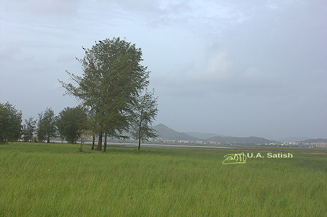 uasatish, India, Vasai, nature, landscape,
