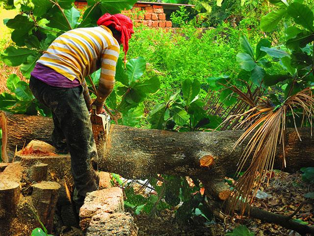 uasatish, India, Kerala, firewood, wood, tree,