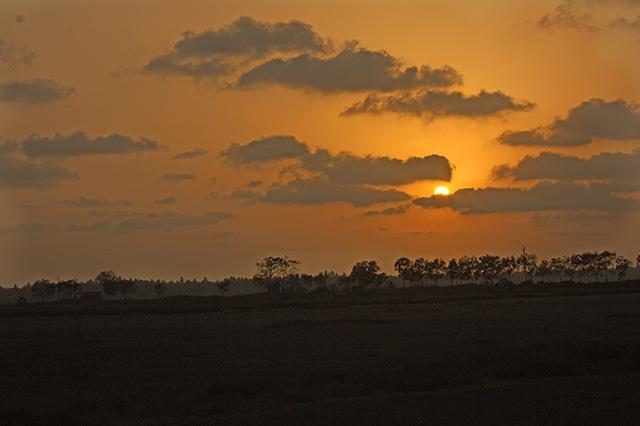 uasatish, India, Mumbai, nature, sun,