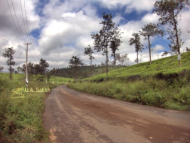 uasatish, India, Kerala, Wayanad, tea gardens,