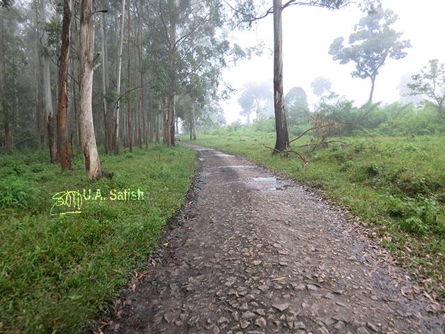 India; uasatish; Muthanga; forest' Kerala; Wayanad; nature;
