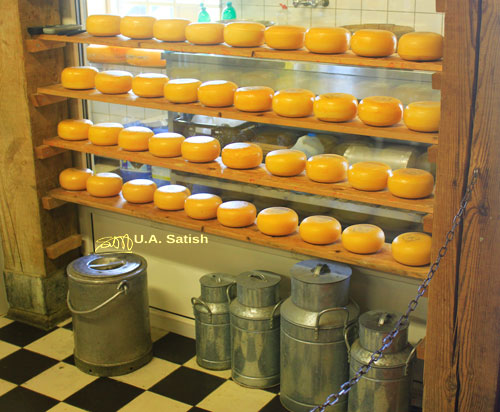 cheese; Netherlands; Zaanse Schans; indoors;uasatish; https://uasatish.com; Zaandam;