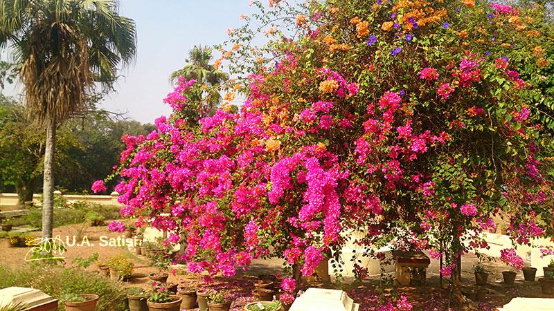 Hill Palace Museum; gardens; Tripunithura; Kochi; Kerala; India; outdoor; flowers; uasatish; https://uasatish.com;