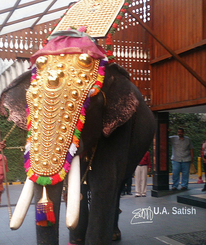 elephant; Kerala; Kochi; India; Thidambu; uasatish; https://uasatish.com;