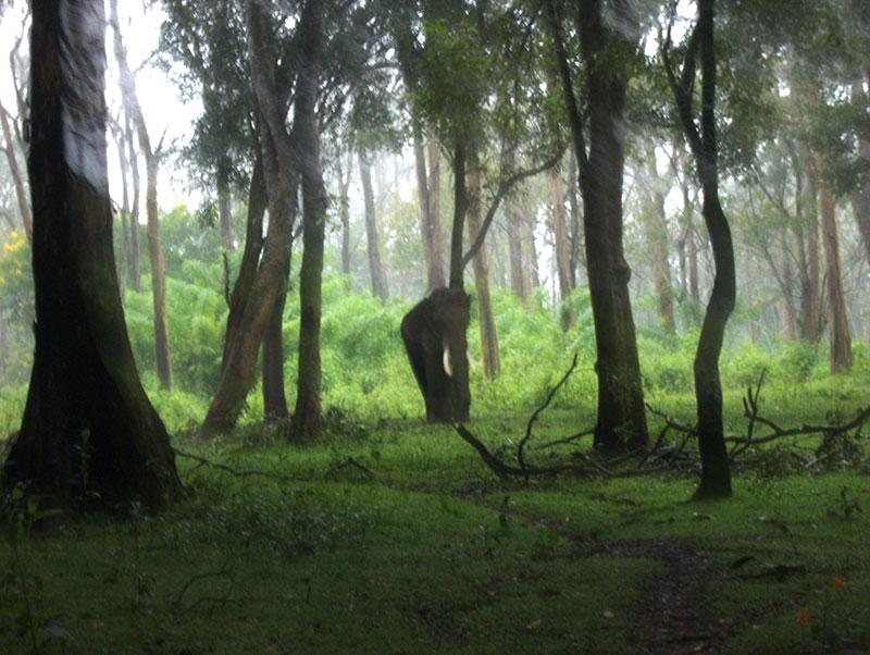 Muthanga; forest; Wayanad; Kerala; India; uasatish; https://uasatish.com; elephant; mist;