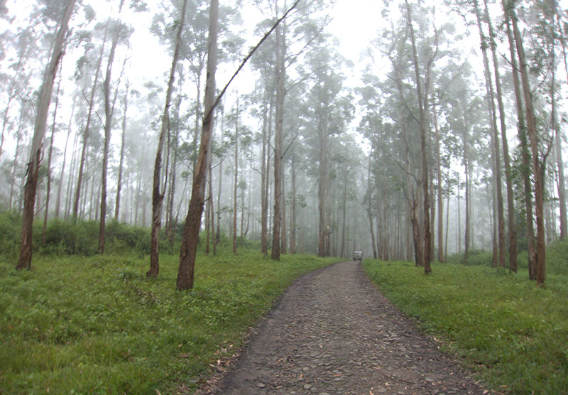 Muthanga; forest; Wayanad; Kerala; India; mist; uasatish; https://uasatish.com;