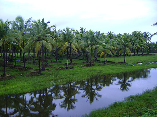 Kerala; India; rains; monsoon; coconut trees; reflections; uasatish; https://uasatish.com;