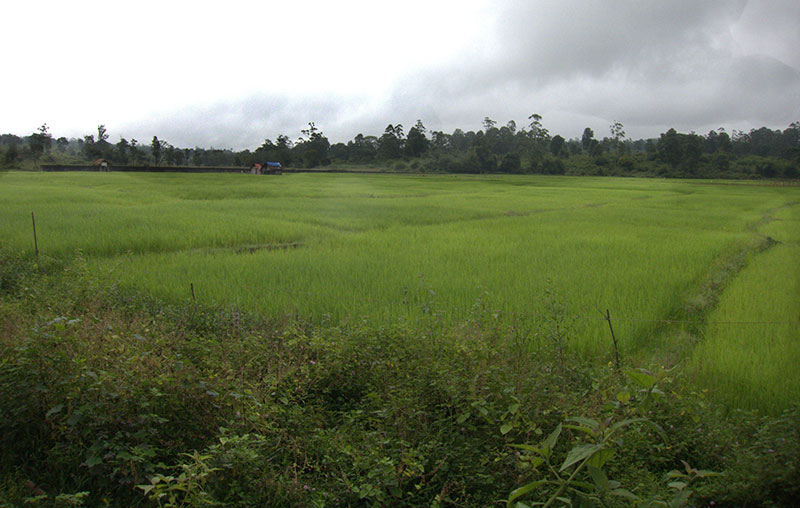 Muthanga; forest; Wayanad; Kerala; India; mist; uasatish; https://uasatish.com; rice fields;