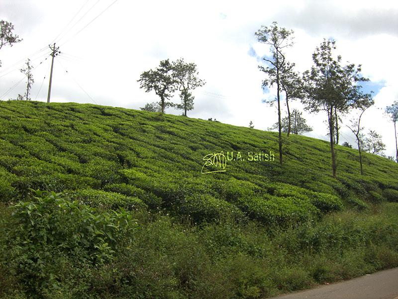 Road; Kalpetta; Kerala; India; outdoor; tea plantations; outdoor; sky; clouds; uasatish;