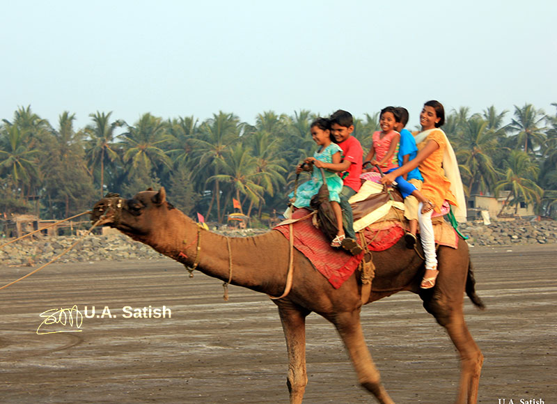 Kalamb Beach; India; Mumbai; outdoor; uasatish; camel;