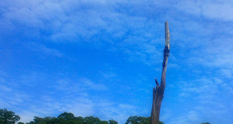 Periyar Lake; Thekkady; Kerala; India; Kumily; travel; outdoor; uasatish; bird;