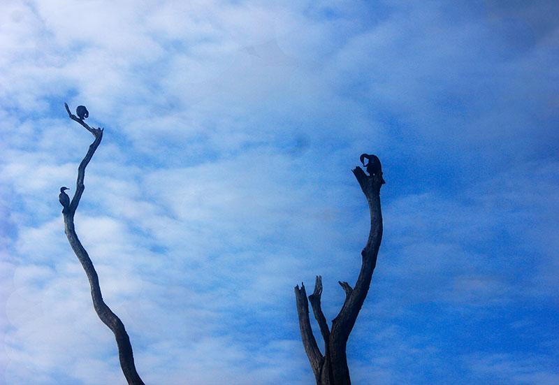 Periyar Lake; Thekkady; Kumily; Kerala; India; travel; outdoor; cormorants;