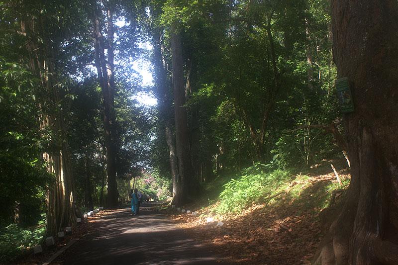 Periyar Lake; Thekkady; Kerala; India; Kumily; travel; outdoor; uasatish; forest;