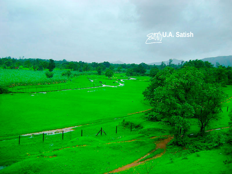 meadow; Konkan; Maharashtra; India; outdoor; travel; uasatish;