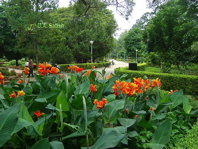 Bangalore; India; Lalbhag; gardens; outdoor; flowers; travel; uasatish;