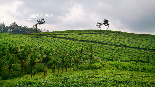 Munnar, Kerala, India, outdoor, travel, tea garden, hill, uasatish,