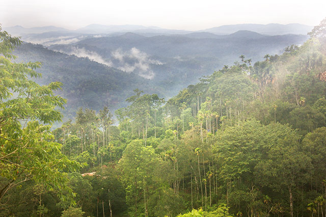 Munnar; hills; Kerala; India; outdoor; travel; uasatish; trees; mist;