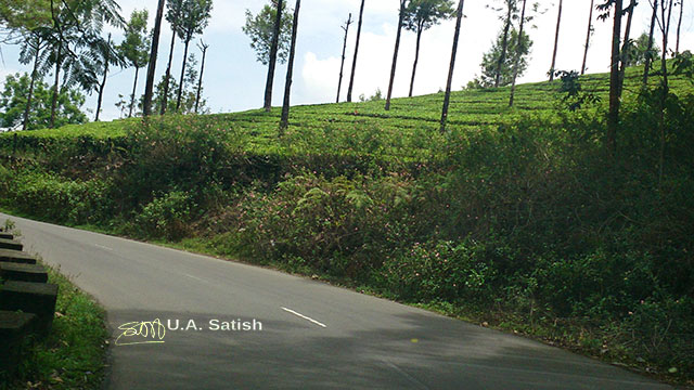 Munnar; Kerala ;india; tea estates; road; outdoor; travel; trees; uasatish;