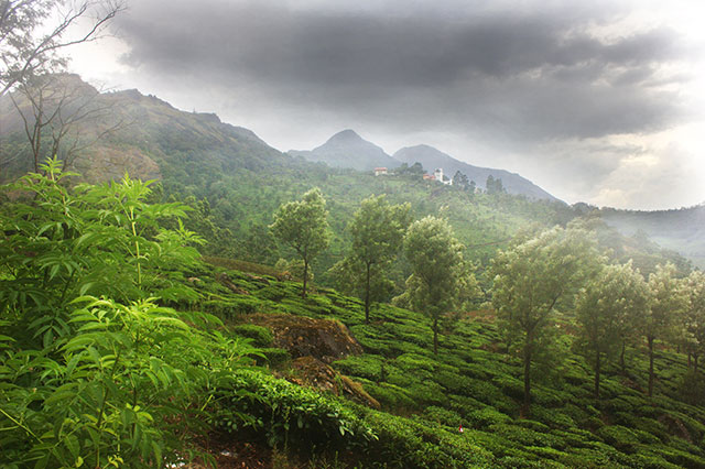 Munnar; Kerala; India; tea garden; outdoor; travel; mountains; clouds; uasatish;