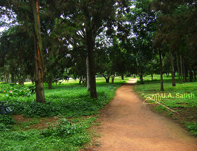 Lalbhag; India; Bengaluru; Bangalore; outdoor; trees; travel; uasatish; gardens;