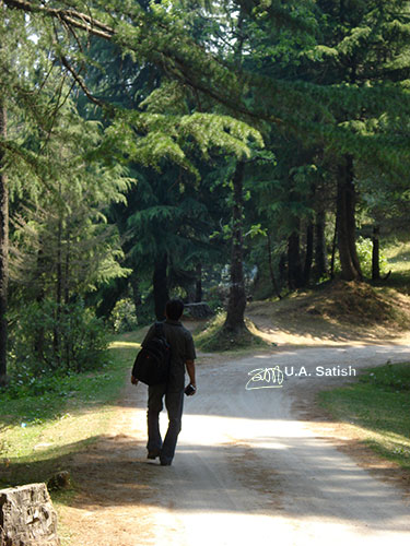 pathway; Kalatope Forest; outdoor; nature; travel; Dalhousie; Himachal Pradesh; India; uasatish; silhouette;