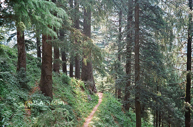 Dalhousie; Himachal Pradesh; India; pathway; outdoor; nature; travel; trees; uasatish;