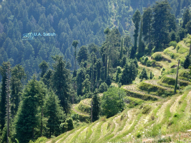 Dalhousie; Himachal Pradesh; India; hills; terrace cultivation; trees; outdoor; nature; travel; uasatish;