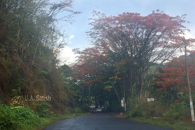 road; trees; red; outdoor; Idukki; Kerala; India; travel; uasatish;