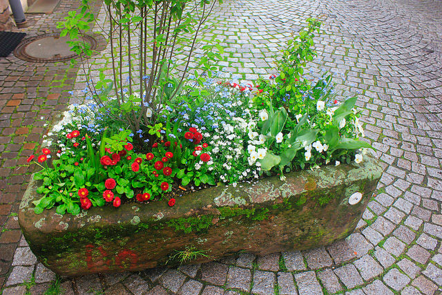 flowers; Gengenbach; Germany; Black Forest; outdoor; travel; uasatish;