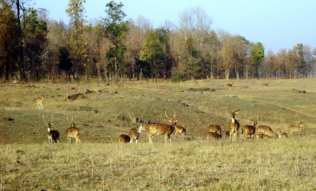 Pench, National Park, Madhya Pradesh, India, outdoor, travel, uasatish, deer,