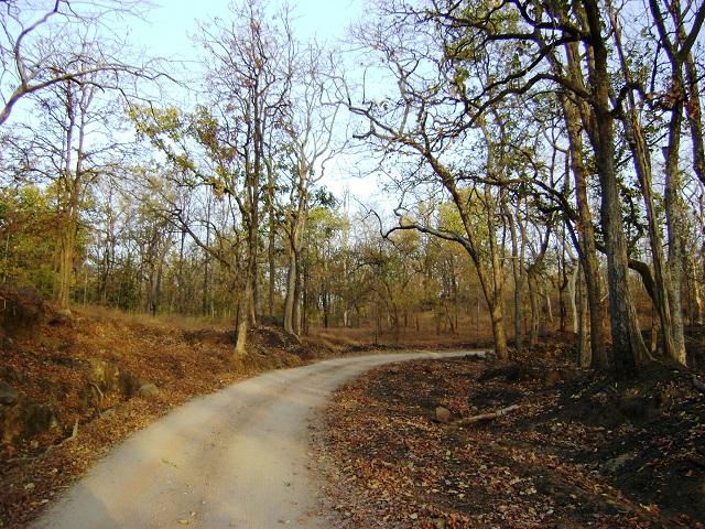 Pench, National Park, Madhya Pradesh, India, outdoor, travel, uasatish,