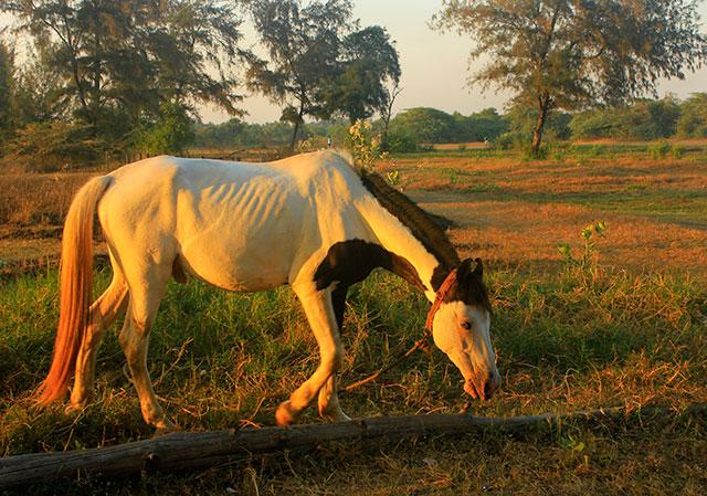 Suruchi Beach; Mumbai; India; Vasai; outdoor; beach; horse; uasatish;