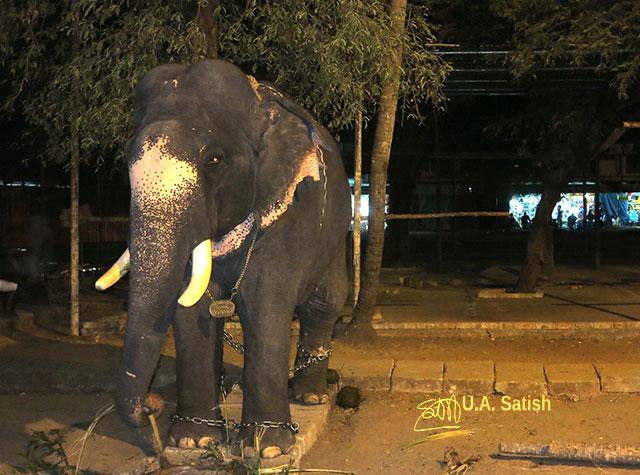 Guruvayur; Kerala; India; uasatish; temple; Sri Krishna; elephant;