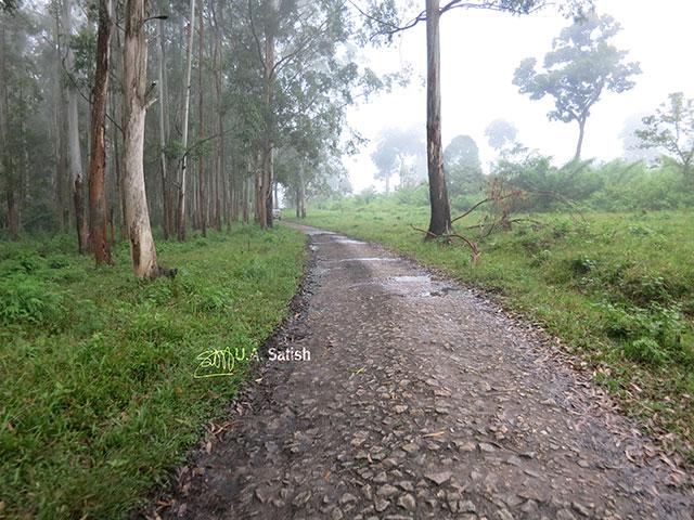 Kerala; Muthanga Forest; Wayanad; India; trees; road; mist; uasatish;